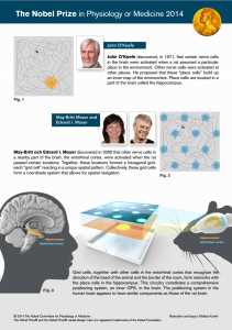 Figure Nobel Prize in Physiology or Medicine 2014